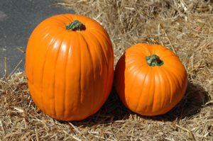pumpkin-picking-leeds